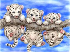 WHITE TIGER TRIPLETS BY KAYOMI HARAI VISIT OUR WEBSITE www.lailas.com for more great images