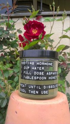 Best Natural Herbs For Anxiety Easy homemade rooting hormone soloutionEasy homemade rooting hormone soloution Hydroponic Gardening, Container Gardening, Organic Gardening, Gardening Tips, Vintage Gardening, Vegetable Garden, Garden Plants, Indoor Plants, Plantation
