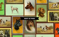 Best in the park dog stuff Dog Grooming, Tarot, Web Design, Pets, Dog Stuff, Image, Google, Animals And Pets, Tarot Decks