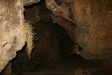La cueva de la Hoz, o cueva de la Rata, es una cueva que continene grabados y pinturas prehistóricas y restos arqueológicos, que se encuentra en el Parque Natural del Alto Tajo, más concretamente en el término municipal de Santa María del Espino, en las orillas del río Linares, a unos 1140 metros de altitud sobre el nivel del mar, en la provincia de Guadalajara, España. Acceso a la Cueva de la Hoz 09.JPG