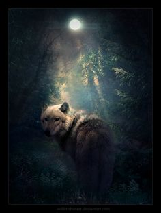 the wolf. The lone wolf out of the pack soon to come back home after it finds what it's looking for <3