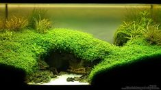 Der User Microsash stellt sein Aquarium *** Under the Bridge *** (Aquascaping) mit den Abmessungen 60x35x40 (54 Liter) mit 30 Bildern vor.