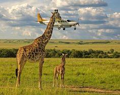 wildlife culturainquieta.jpg2