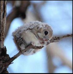 Frosty cuteness