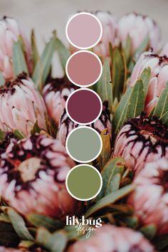 Cool Colour Palette, Vintage Colour Palette, Color Schemes Colour Palettes, Palette Art, Color Combos, Site Art, Flower Colour, Protea Flower, Beautiful Color Combinations