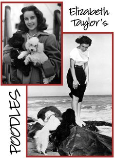 ... Poodle was the Top Dog. Elizabeth Taylor shared her life with several of ...interiordesignhound.com