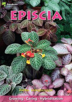 Common Garden Plants, Shade Garden Plants, House Plants Decor, Plant Decor, Hoya Plants, Bonsai Plants, Rare Plants, Trees To Plant, Plant Leaves