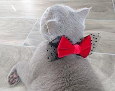 Hola y Bienvenidos a PinkBau, costura y esquina creativa situado en Rovereto, Italia. Todos nuestros artículos son únicos y hechos a mano con amor! ---------------------------------------------------------------- Lana cuadros bufanda para mascotas  Accesorio perfecto que mantendrá su mascota caliente y estilo  durante la temporada de frío. La bufanda de suave lana cuadros caliente va muy bien alrededor del cuello, va de un extremo sobre el otro con un sujetador de resorte que facilita el…