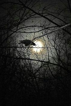 Crow | Moon | Raven