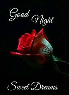 Good Night Love Pictures, Good Night Friends Images, Beautiful Good Night Quotes, Good Night Thoughts, New Good Night Images, Romantic Good Night Image, Lovely Good Night, Good Morning Love Messages, Good Night Gif