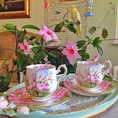 """Bir Fincan Bir Kahve pe Instagram: """"Bir çift sevgi dolu🐤👀 göz bana 🙋🏻bakıyor sanki...😍Sevenleriniz hep çoğalsın, hiç azalmasın💓"""" Afternoon Tea, Tea Time, Tea Cups, Coffee, Tableware, Photos, Folklore, Silver, Glass"""
