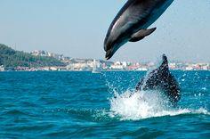 Seis planes ideales para que los niños se lo pasen bomba en en Portugal | via Hola Viajes | 23/05/2017 Desde pasar un sábado salvaje con los animales en Lisboa a navegar en un rabelo por el Duero, ver delfines en el estuario del Sado o montar en calesa por los jardines palaciegos de Sintra. Propuestas para tener entretenidos a tus hijos durante una escapada muy cercana. #Portugal Photo: Estuario-sado-setubal-portugal