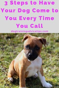3 Steps to Have Your Dog Come to You Every Time You Call   Dog Training Tips   Dog Obedience Training   Dog Training Commands   http://www.dogtrainingadvicetips.com/basic-dog-training-3-steps-dog-come-every-time-call