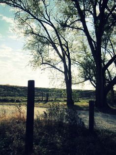 Surreal Tree and Fence in the Time Warped Morning by callamitouscreations.deviantart.com