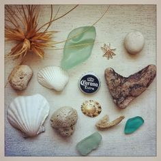 beachcomber: beach finds