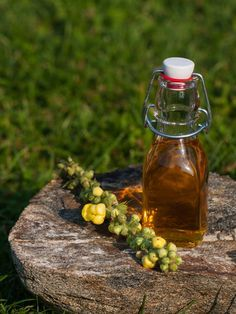 Dziewanna (Verbascum L.) to dziecko światła i wielkich, otwartych przestrzeni. Podobnie jak ja, lubi sycić się słońcem i mieć widok hen, aż po horyzont. Poza tym, jej wymagania nie są wygórowane. N… Herb Garden, Preserves, Flora, Herbs, Eat, Pharmacy, Alcohol, Preserve, Apothecary