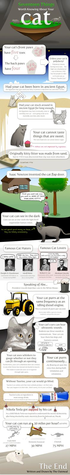 This infographic provides seventeen fun and interesting facts about cats. Facts include, information such as cats not being able to see in the dark an