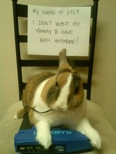 rabbit and wifi