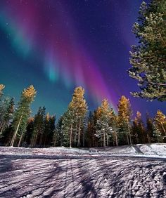 Aurora Borealis, someday I will see them over a snowy forest in Ivalo, Finland. Beautiful Sky, Beautiful World, Beautiful Places, Image Nature, All Nature, Aurora Borealis, Wow Photo, Snowy Forest, See The Northern Lights