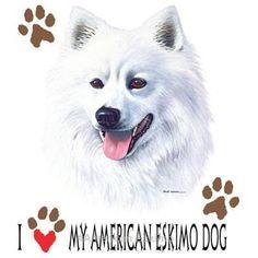 American Eskimo is best my friend. #AmericanEskimo #dogs