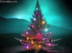 Beautiful Christmas Tree | Beautiful Christmas Tree For Lily ♥ - lilyz Photo
