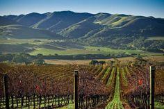 Los Olivos' Best Wineries: Attractions in Santa Barbara