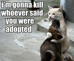 I'm gonna kill whoever said you were adopted