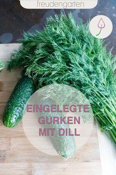 Gurken einlegen ganz ohne Kochen. Mit diesem Rezept sind sie schnell eingemacht. #Rezept #Gurken #Dill