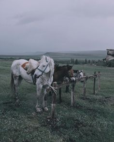 Когда нет настроения просто подумай о лошадях:) Как по мне это самые фотогеничные создания согласны?;) #crimeadreamtour by elivosk