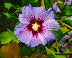 hibiscus | Hibiscus wallpaper 1280x1024 resolution