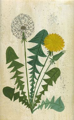 The Dandelion is my favorite Flower. Love this picture. Illustration Photo, Illustration Blume, Illustrations, Botanical Illustration, Art Floral, Motif Floral, Botanical Drawings, Botanical Prints, Impressions Botaniques