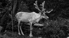 ГЛАЗ ГОРА ~ ОЛЕНЬ ~ КУЛОН В ФОРМЕ ОКА ДРЕВНЕГО ЕГИПЕТСКОГО БОГА ГОРА С ГЛАЗОМ ОЛЕНЯ #олень #глаз_гора #украшения #животные