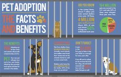 Infographic: The Facts and Benefits of Pet Adoption. Guinea pigs end up in shelt… - Pet Supplies Guinea Pig Care, Guinea Pigs, Animal Shelter, Animal Rescue, Rescue Dogs, Pet Dogs, Doggies, Buy A Dog, Puppy Mills