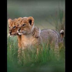 Simba & Nala? :)