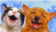 NOTICIASDISLOCADAS: A Nuestras Queridas Mascotas...