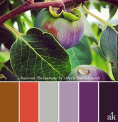 A persimmon-inspired color palette | fresh from the farm