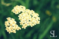 Sommergefühle - Weiße Blüte