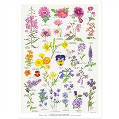 Plakat med Spiselige Blomster fra Koustrup