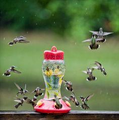 Hummingbirds dancing in the rain captured by B. Vartan Boyajian