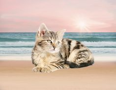 #Striped #Cat Sitting on #Beach #sunset Oil #Painting #pet #animal