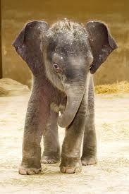 elephant:))