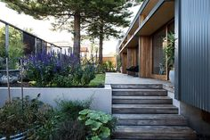 steps and planters | Redhead Residence by Bourne Blue Architecture