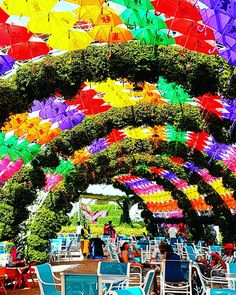 Dubai Miracle Garden, UAE, United Arab Emirates, flower, garden