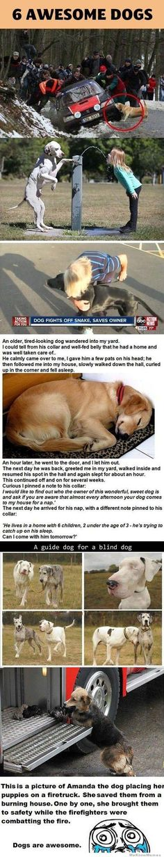 6 awesome dogs - Just DWL