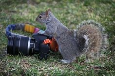 Most popular tags for this image include: lovelycamera, aww, cool, cute and funny