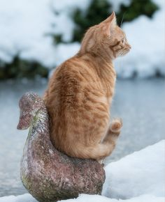 * * I LOVE HOW CATS CAN FIND THE MOST UNUSUAL PLACES TO SIT.
