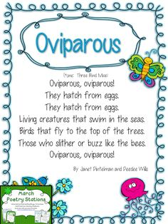 Oviparous Study (from Mrs. Wills Kindergarten)