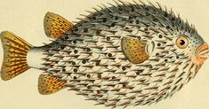 Two Million Wondrous Nature Illustrations Put Online by The Biodiversity Heritage Library | Open Culture