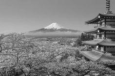 Черно белое изображение сакуры, пагоды и горы Фудзи. Вариант 1