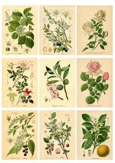 DIY Botanical Labels or Tags - Free Printable